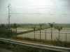 Ханой. Рисовые поля.